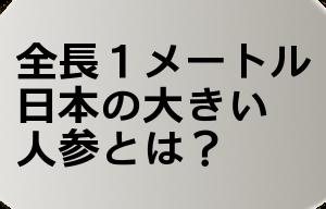 全長1メートル!日本の大きい人参とは?