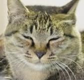 細い目をする猫
