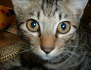 子猫(オス)