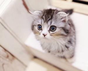 上を見つめる猫