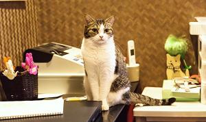 店番する猫